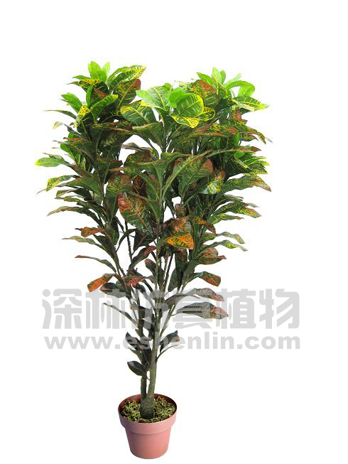 product name: 变色木
