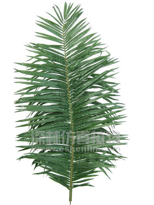 商品名称:椰子树叶