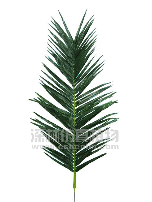 叶类 椰树叶 > 椰子树叶  商品编号:s95304 浏览次数:2439 上架时间