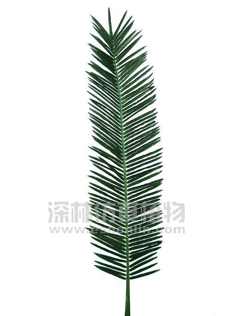 商品名称:; 椰子树叶子;