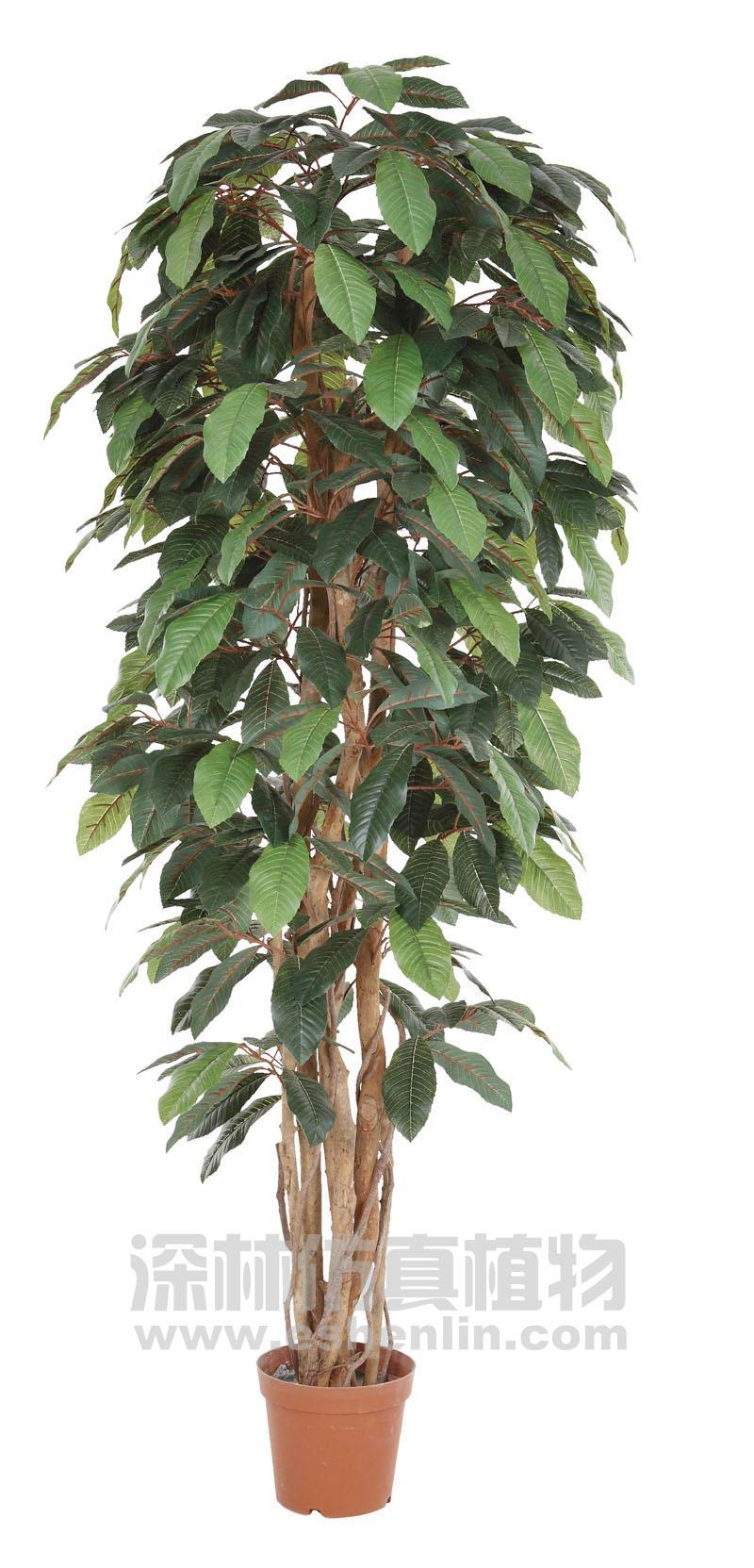 琵琶树立面图手绘